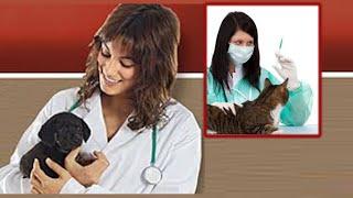 Вызов на дом ветеринара  или ехать в клинику с питомцем  Ветакадемия 19 11 2014(, 2014-12-30T08:58:59.000Z)