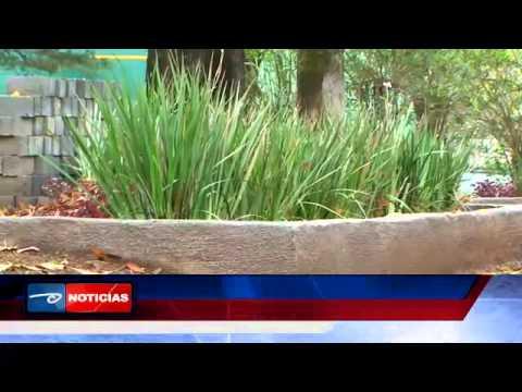 uruapan plantaran 50 mil plantas de ornato en jardines y