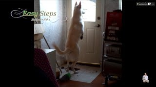 This is How I Trained Bruno to Open the Door | Dog Locked Inside Feeling Anxious