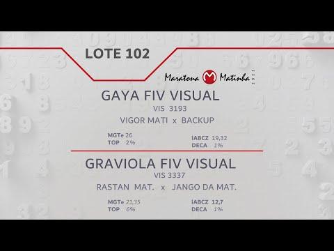 LOTE 102 Maratona Matinha