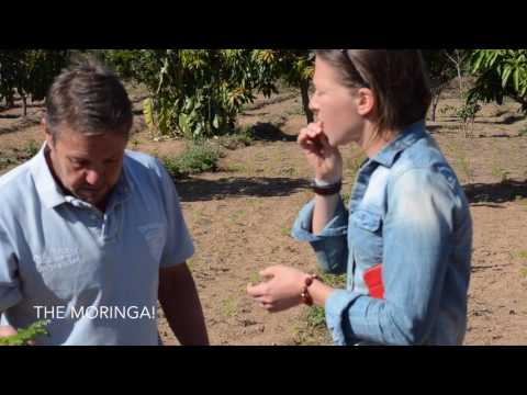 organic volunteering farm in South African mountains