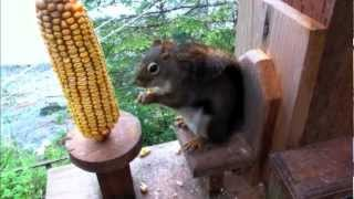 Cute Red Squirrel With Chair Feeder!