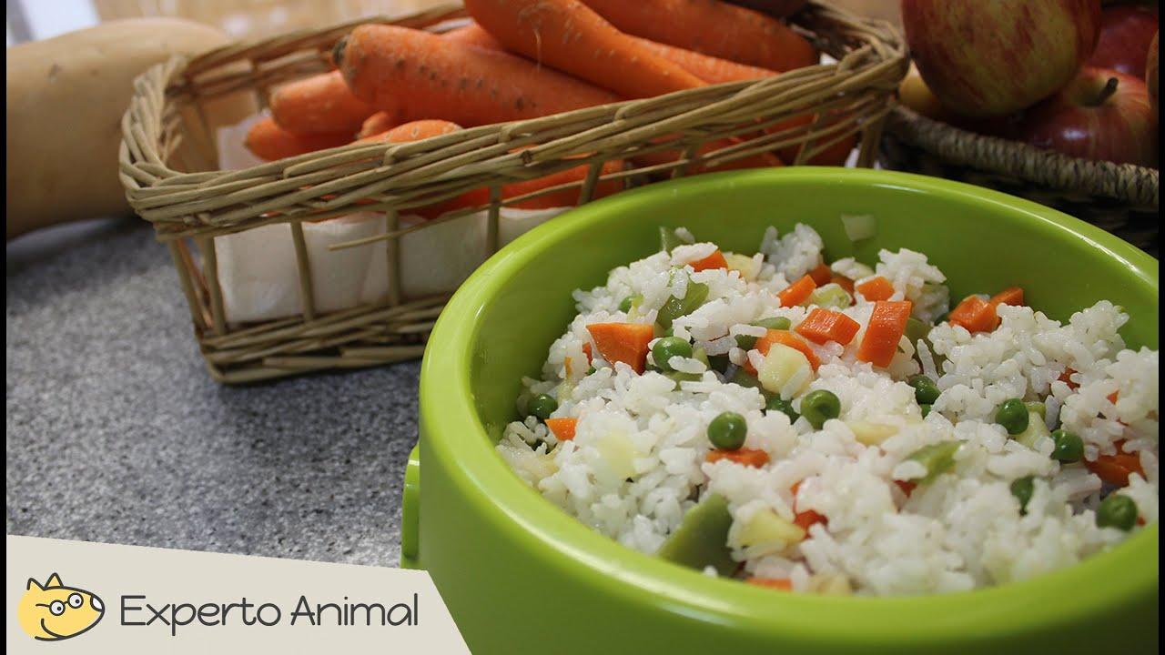 Comida casera para perros  Arroz con verduras  YouTube