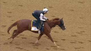Belmont Stakes 2017 Contender Twisted Tom 6.06