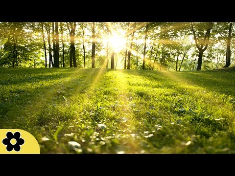 Healing Meditation Music, Relaxing Music, Music for Stress R
