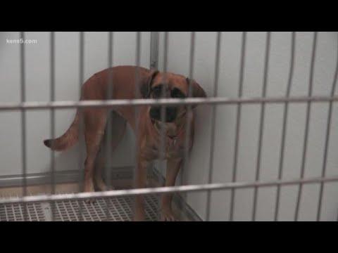 San Antonio Pets Alive! Surpasses Yearly Goal Of Saving Lives