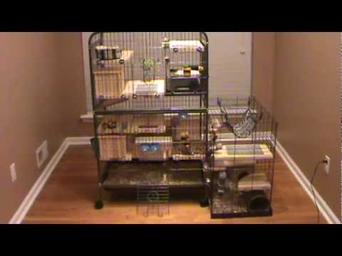 Custom design chinchilla cage tour