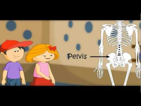 The Skeletal System , Skeleton Dance -How Body Works-with Quiz on Bones