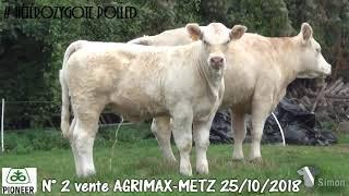 LOT 2 - Vente Agrimax à Metz - 25 octobre 2018 - Simon Genetic