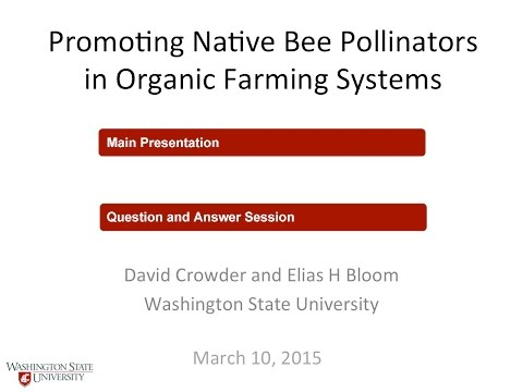 Promoting Native Bee Pollinators in Organic Farming Systems