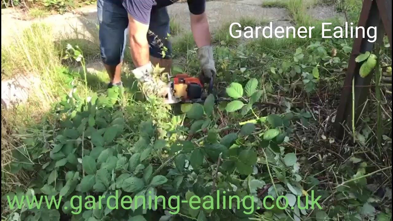 Gardening Ealing Gardener In Landscaping Garden Clearance Tree Surgery