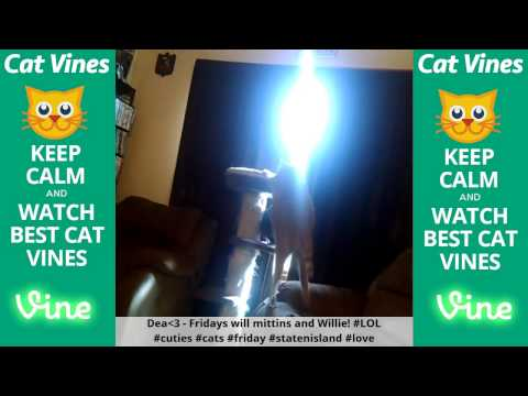 Funniest Cat Vines #110 - Updated September 11th, 2015