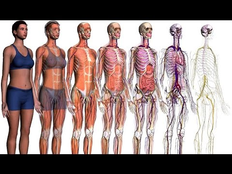 Pdf gardner anatomia