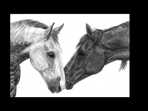 LEONIE SUTTON fine art Equestrian card collection.