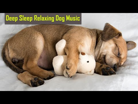 anti anxiety music for dogs - anti anxiety music for dogs - cure separation anxiety with dog music!