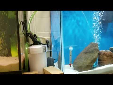 Diy aquarium Bridge