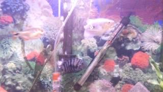 Fish tank update