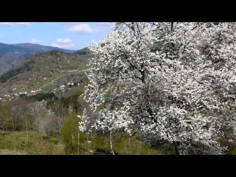 DIAPORAMA. Quelques fleurs des Vosges, sur les crêtes et dans la vallée de Saint-Amarin poster