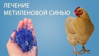 Куры упали... ЛЕЧЕНИЕ КУР (Часть 13) | как мы вылечили кур с помощью метиленовый синий