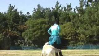 Canine Freestyle MF She is 10 years old. パール10歳 http://www3.f...