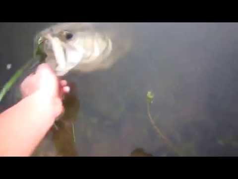 рыбак 80-го уровня ловит рыбу без снастей