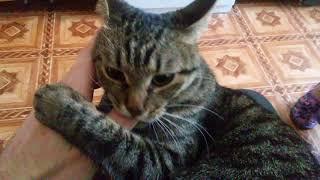 "Кошка ""Ласка"" ласково кусается :)"