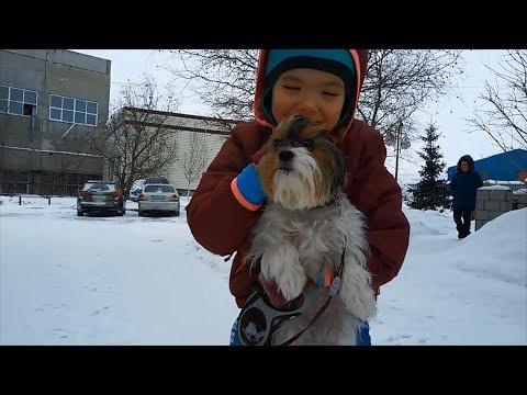 Woof 🐺 Siberian Husky 🐕 Berger de Brie 🐶 Spaniel 🐩 Herding Dog ❄ Dogs ☃ Doggy ⛄ Briard
