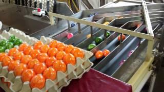 Как красят яйца на пасху