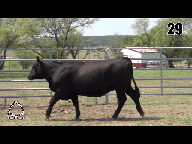 Pearcy Angus Ranch Lot 29