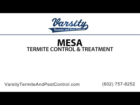 Mesa Termite Inspections & Treatment By Varsity
