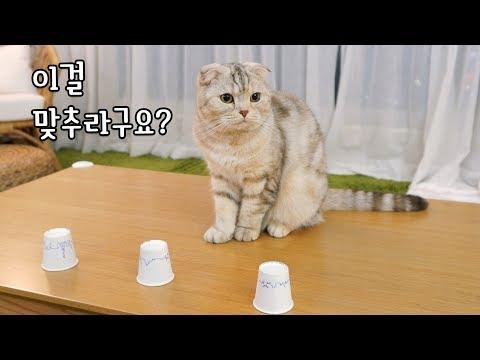고양이들과 야바위 게임을 해봤다 2탄 라온, 수리, 노을이편