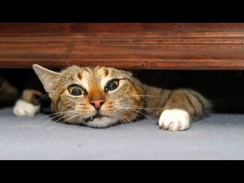 The very best and funniest CAT moments – Funny cat compilation