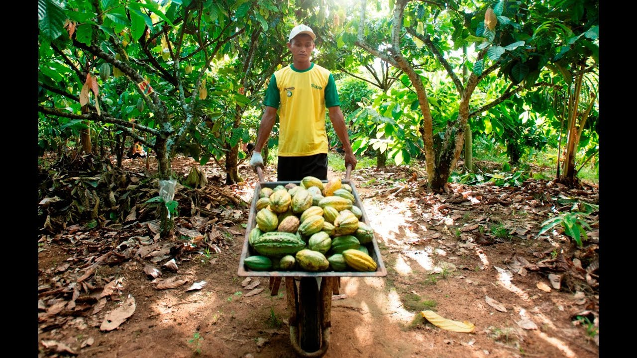 Cocoa Life - Indonesia Outcome Assessment: A First Look At Our Impact