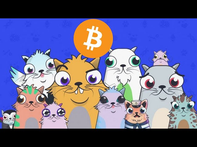 CRYPTOKITTIES : LES CHATS A LA MODE ETHEREUM