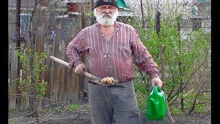 Новый метод посадки картошки. Посадка картошки 2016