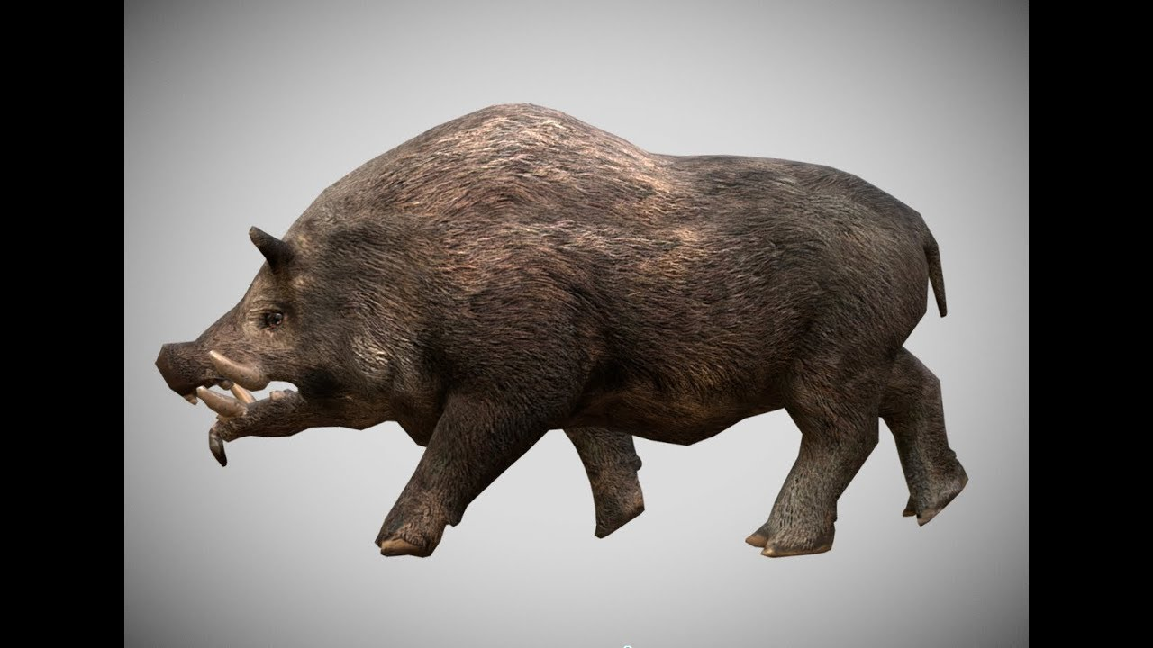 Low poly Wild Boar 3D Model Animated - YouTube