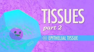 Crash Course: Anatomy & Physiology: Introduction to Epithelial Tissue thumbnail