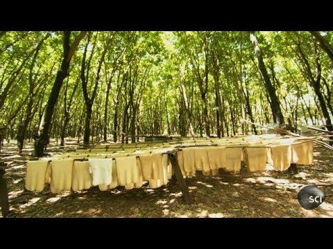 Natural Rubber | How It