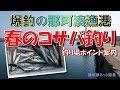 春のサバ釣り「爆釣の那珂湊漁港でコサバ釣り」健啖隊ネット隊員(y.katsu)