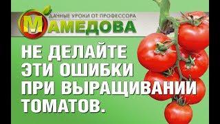 🍅 Не делайте ЭТИ Ошибки при Выращивании Томатов. Рекомендации профессора Мамедова