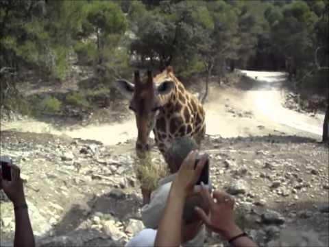 SAFARI AITANA - Wildlife Animal Safari - Spain