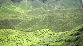Cameron Highlands Bharat Cameron Valley Tea Plantation view