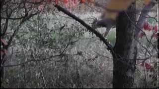 First buck shot video (slow)