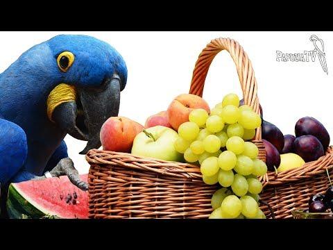 Agresja U Papug A Dieta