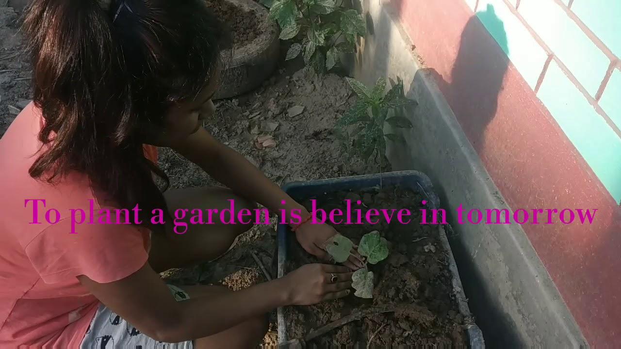 ll Gardening Blog🌱ll Quarantine Diaries ll