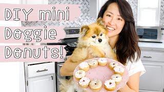 Strawberry Mini Donuts for Dogs  DIY homemade Dog Treat Recipe