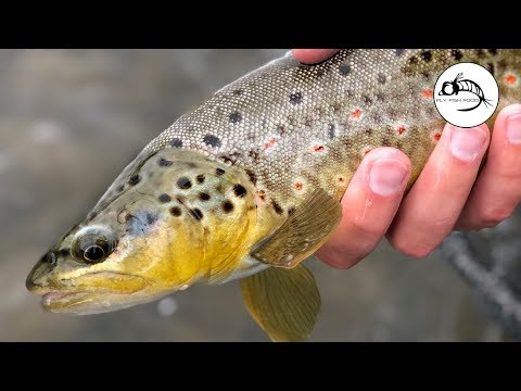 Euro Nymphing Tips To Catch More Fish
