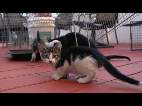 Socializing feral kittens!