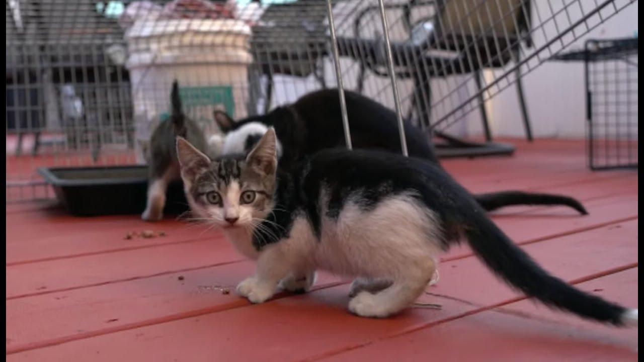 Socializing Feral Kittens Youtube