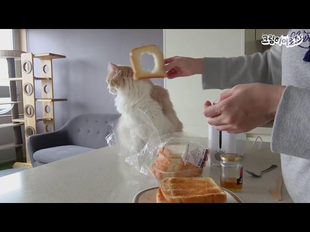 식빵 고양이가 너무 귀여워서 웃음을 멈출 수가 없어요